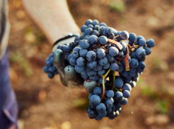 赤ワインが血圧を下げる